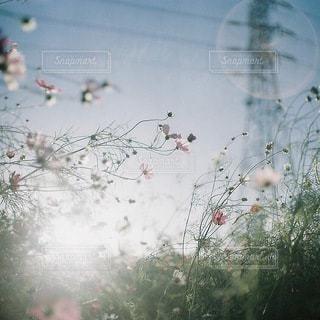 風景 - No.3744