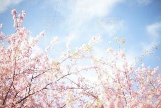 風景 - No.3670