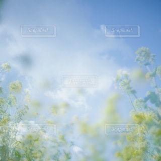 風景 - No.3625