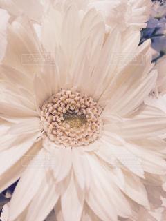花の写真・画像素材[284459]