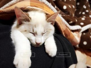 猫の写真・画像素材[287269]