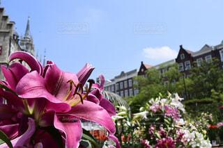 花の写真・画像素材[286621]