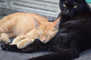 猫の写真・画像素材[287895]