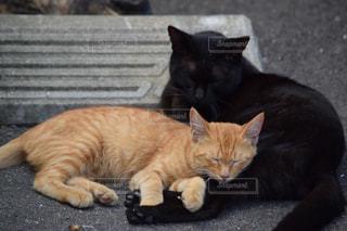 猫の写真・画像素材[287896]