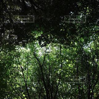 自然の写真・画像素材[287712]