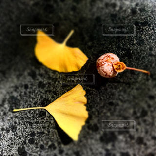 自然の写真・画像素材[284488]