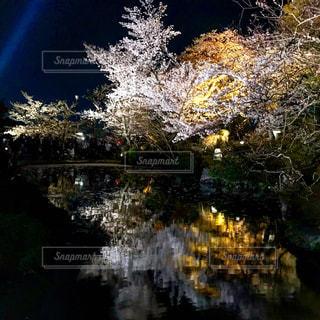 近くに池のアップの写真・画像素材[1119262]