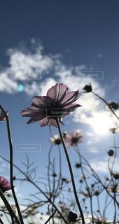 木からぶら下がって花の写真・画像素材[1122981]