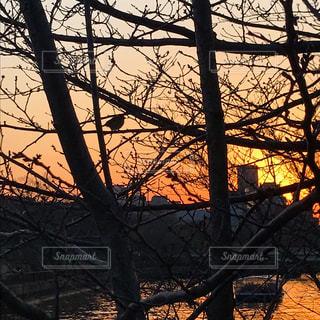 夕焼け空の写真・画像素材[3034742]