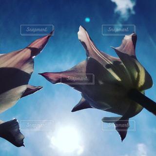 空飛ぶFlowerの写真・画像素材[3096446]
