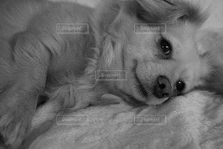 犬 - No.30185