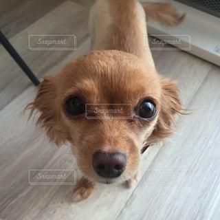 犬の写真・画像素材[286602]