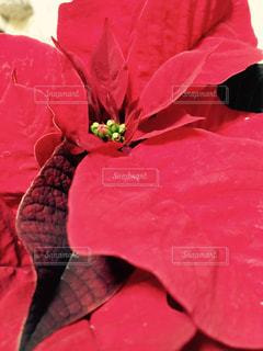 花の写真・画像素材[284967]