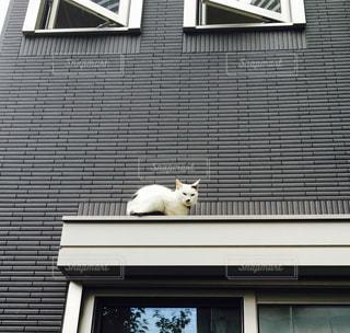 猫 - No.286927