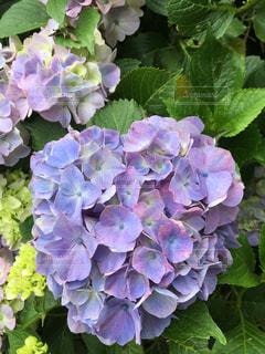 花の写真・画像素材[336599]