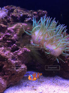 魚の写真・画像素材[413557]