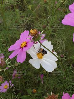 自然の写真・画像素材[285089]