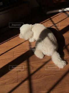 犬の写真・画像素材[321643]