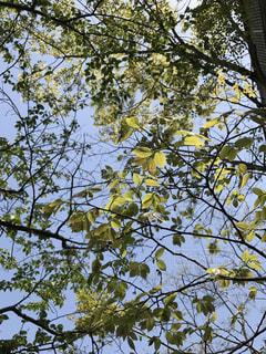 春の写真・画像素材[456610]