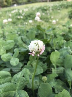 花の写真・画像素材[456620]