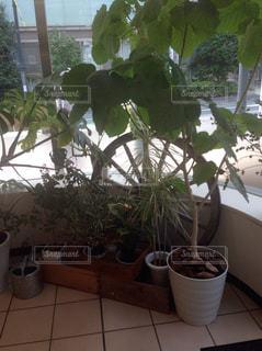 植物の写真・画像素材[299613]