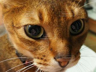 猫 - No.306232