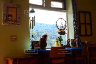 猫の写真・画像素材[341958]