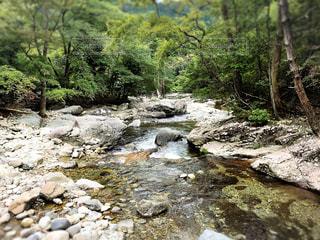 森の中の滝 - No.879430