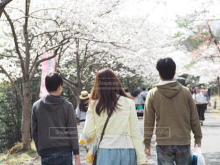 毎年恒例のお花見の写真・画像素材[1100594]