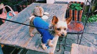 犬の写真・画像素材[285303]