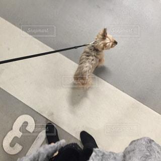 犬の写真・画像素材[286541]