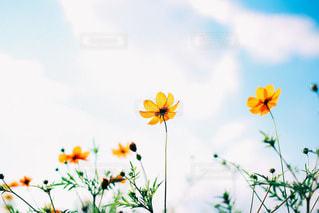 風景の写真・画像素材[3527]