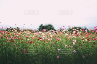 風景の写真・画像素材[3526]