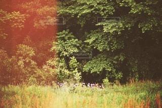 自然の写真・画像素材[3525]