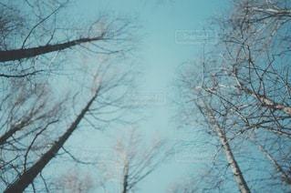 風景の写真・画像素材[3520]