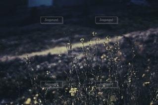 風景の写真・画像素材[3519]