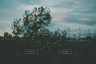 風景の写真・画像素材[3515]