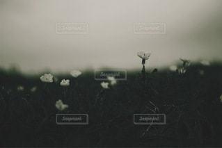 花の写真・画像素材[3512]