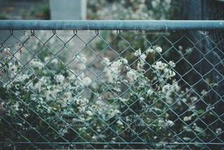 風景の写真・画像素材[3511]