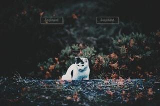 猫の写真・画像素材[3508]