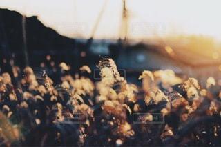 風景の写真・画像素材[3507]
