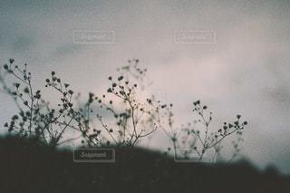 風景の写真・画像素材[3502]