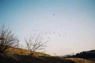 風景の写真・画像素材[3495]