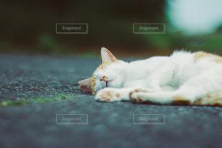 猫の写真・画像素材[3490]