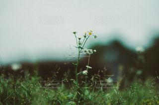 風景の写真・画像素材[3489]