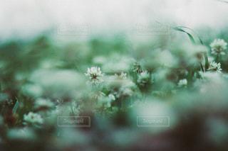 風景の写真・画像素材[3488]