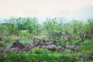 自然の写真・画像素材[3485]