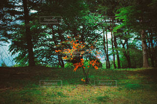 自然の写真・画像素材[3481]