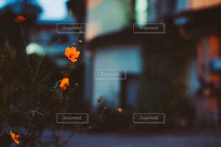 風景の写真・画像素材[3473]