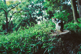 猫の写真・画像素材[3469]